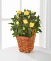 Image of Standard version for Lighthearted Moments Mini Rose Plant - FedEx