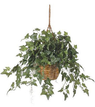 Flowers Fast coupon: Hanging Ivy