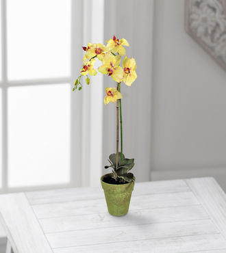 Jane Seymour Silk Botanicals Yellow Phalaenopsis Orchid - WebGift